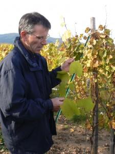 Dans les vignes avec Albert HERTZ, vigneron à Eguisheim