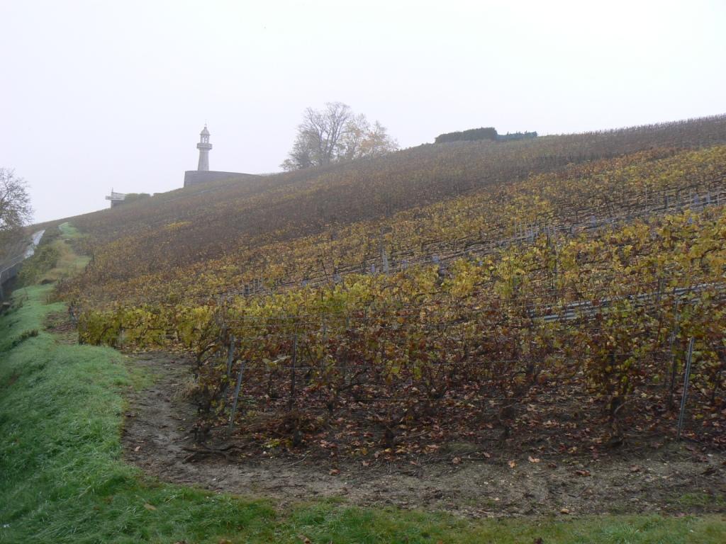 Vignes sur la Montagne de Reims