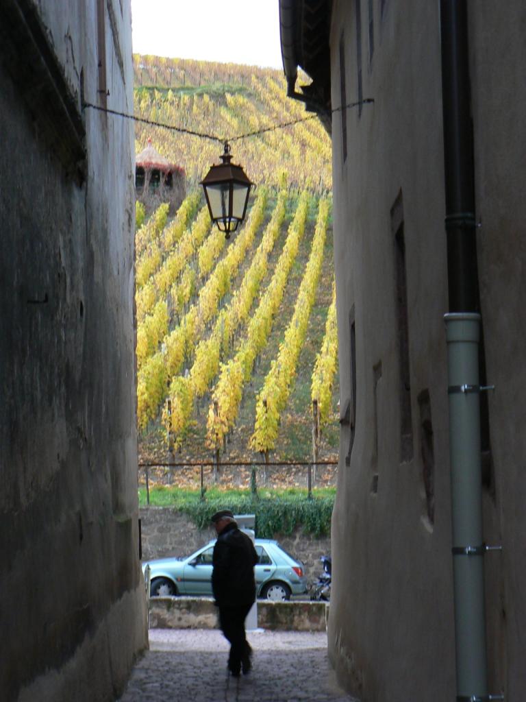 Alsace : vignes... nostalgie